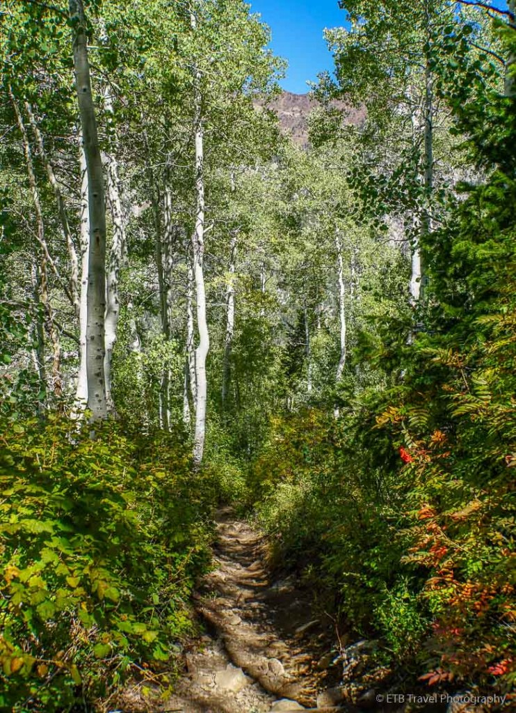 Red Pine Lake Trail in Little Cottonwood Canyon