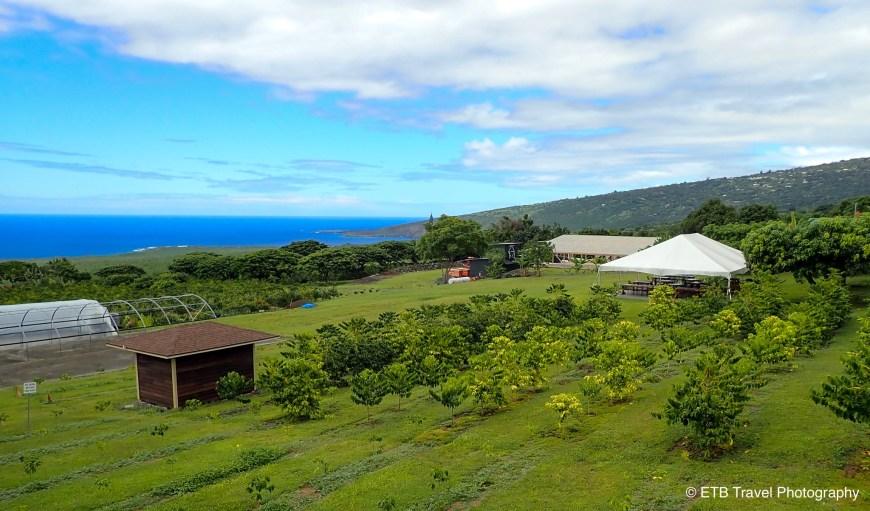 Bay view coffee farm on the Kona coast