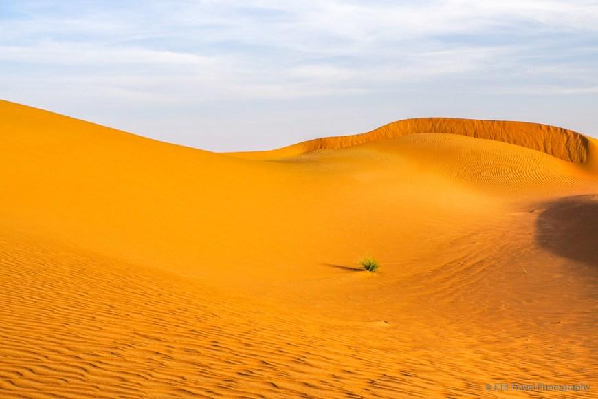 patch of grass in Sharqiya Sands