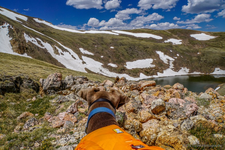 Annie and the marmot at Square Top Lakes