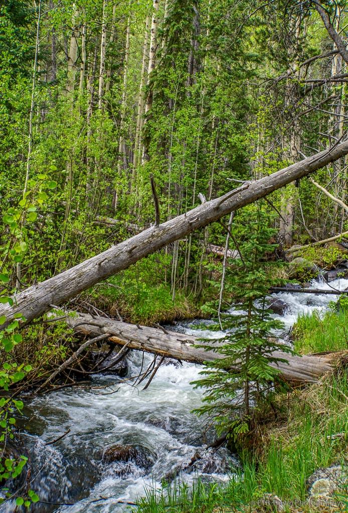 creek on Bruno Gulch Trail