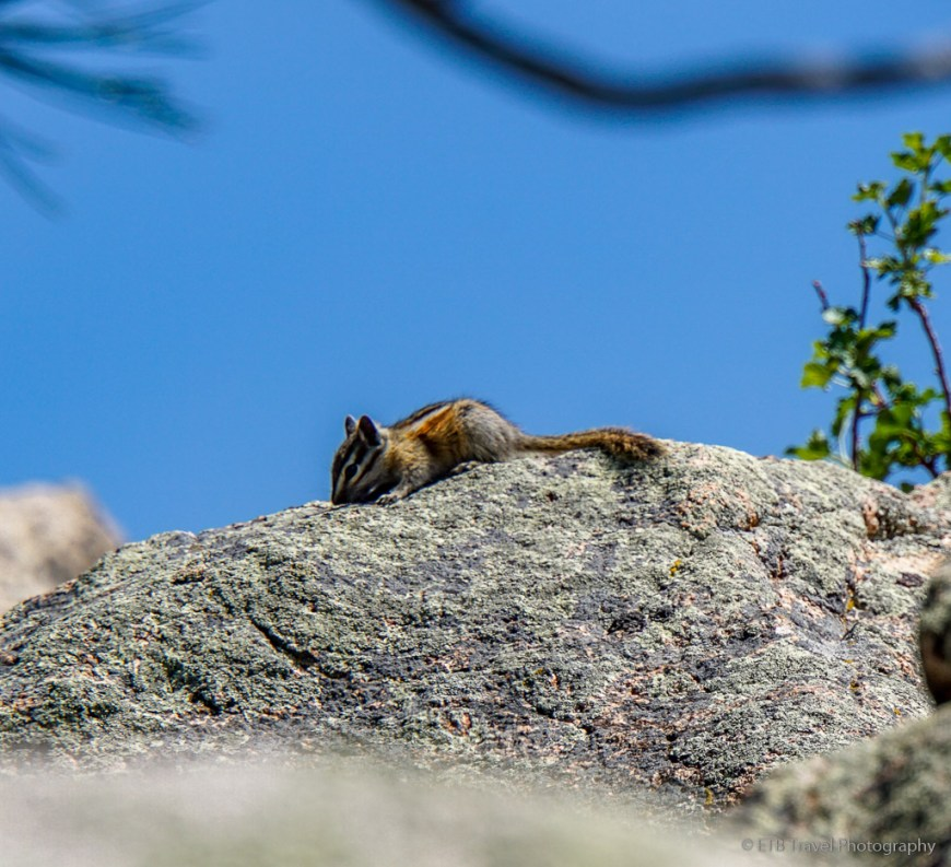 chipmunk on stone mountain