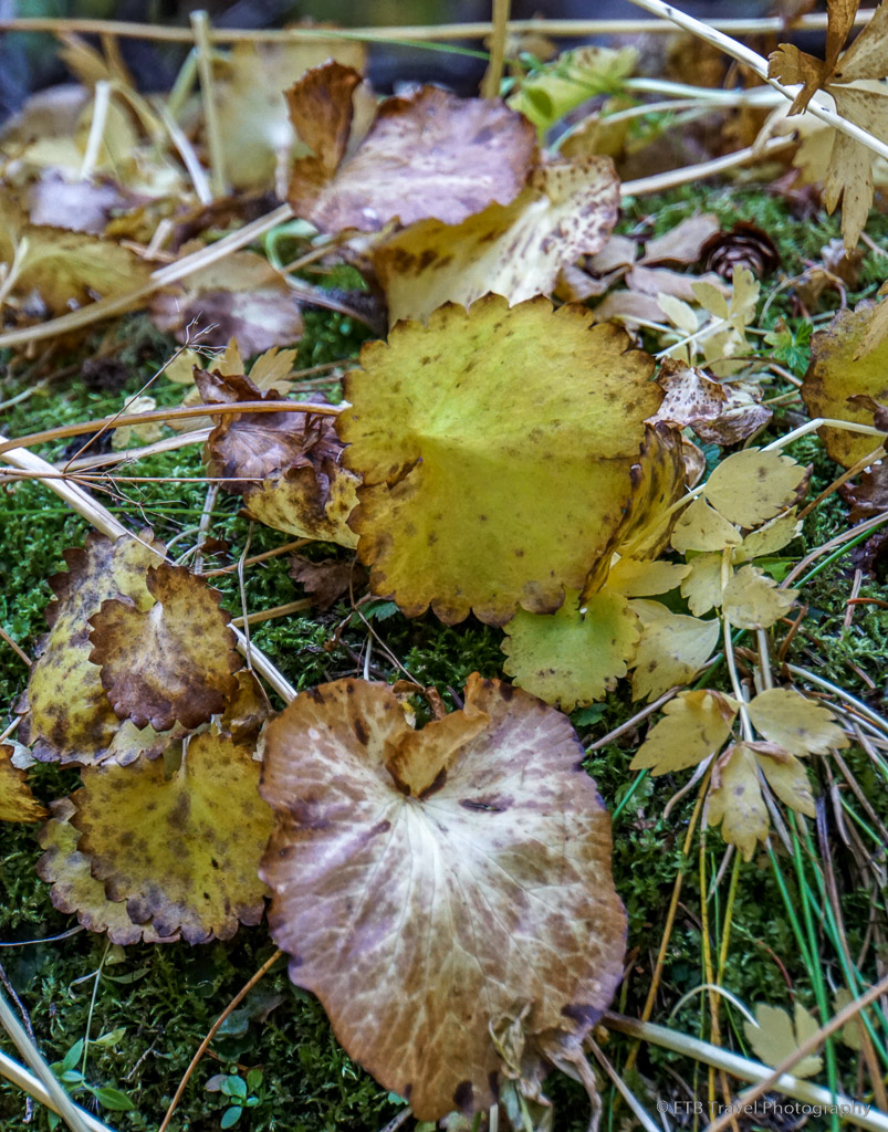 fall foliage on grouse lake trail