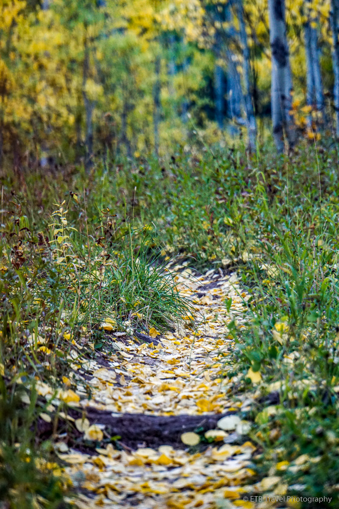 grouse lake trail