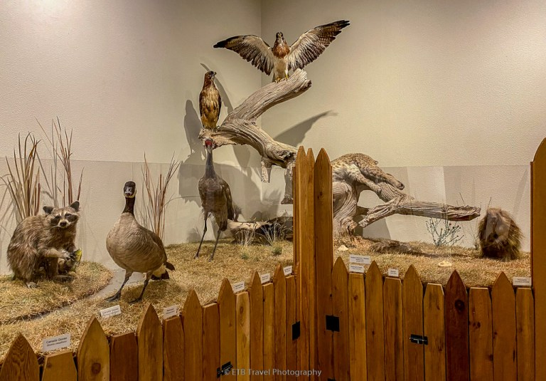wildlife exhibit at xit museum