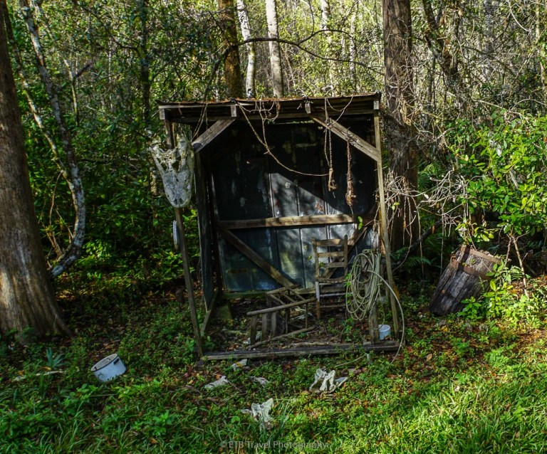 old gator camp in the cypress forest of the everglades