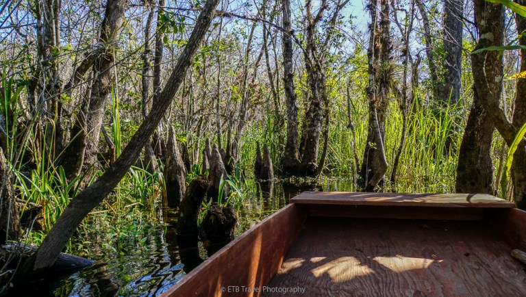 pole boat swamp tour in Big Cypress