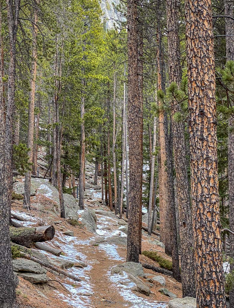 evergreen forest on blue grouse trail
