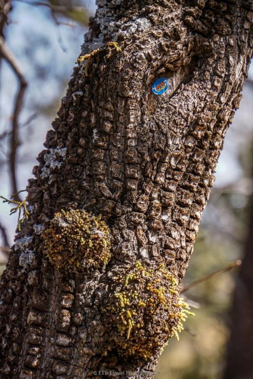 cuties sticker on tree