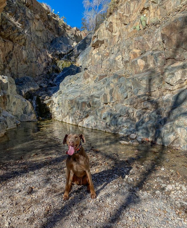 Annie at the waterfall on Copper Canyon Loop Trail #504