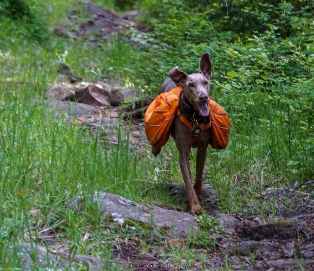 annie running on hazard creek trail