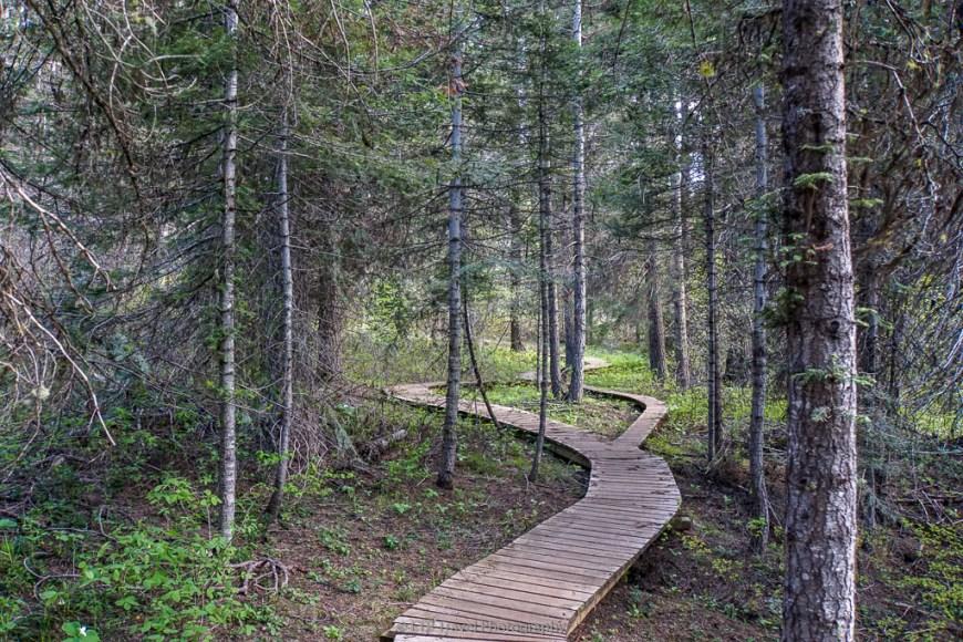boardwalk on westy trail