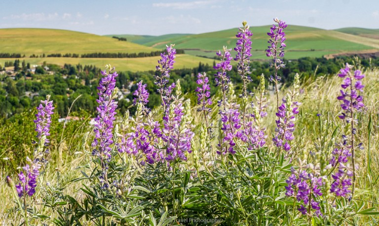 wildflowers on rock hill hike near dayton