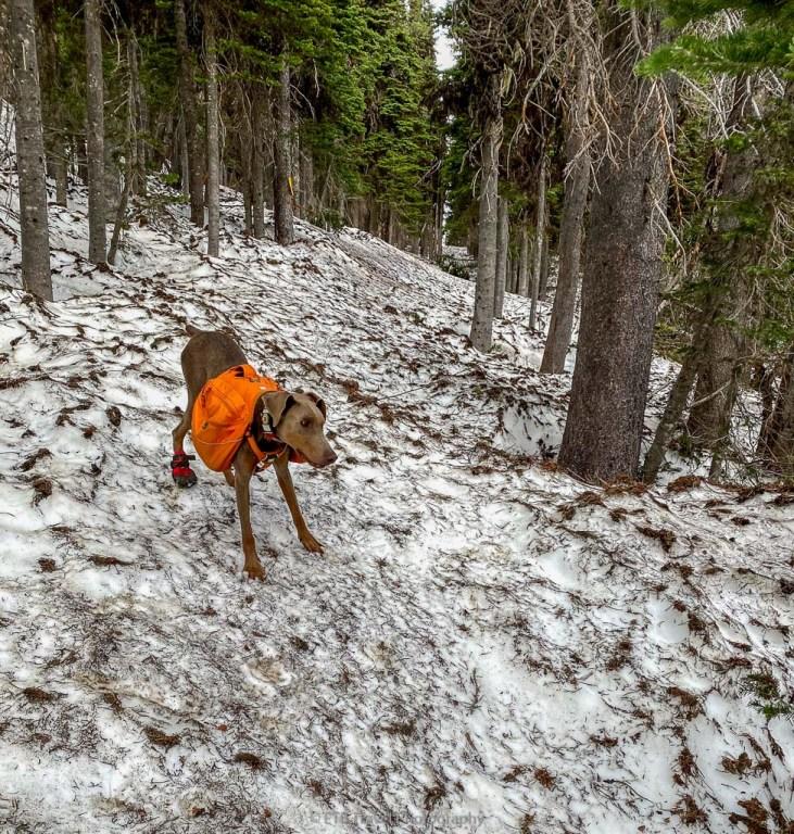 Annie on the Airplane Crash Site Trail