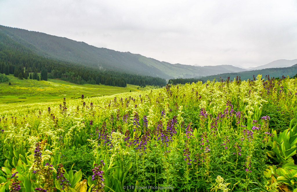 wildflowers on snodgrass tral