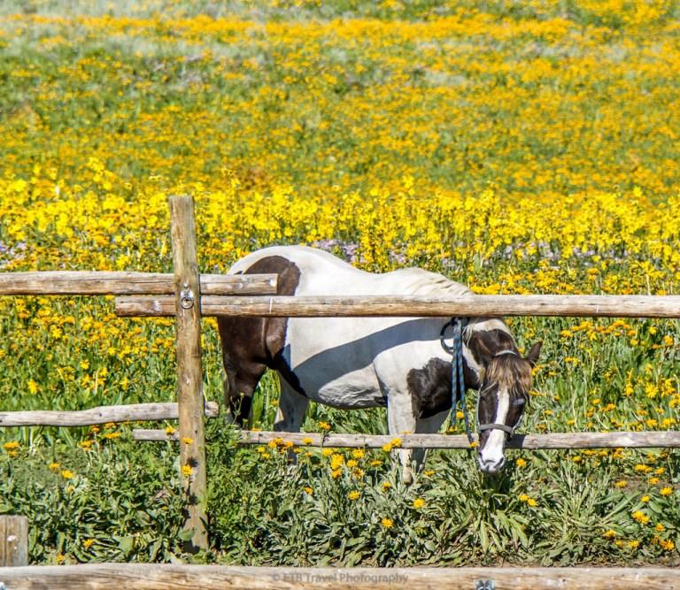 horseback riding in crested butte
