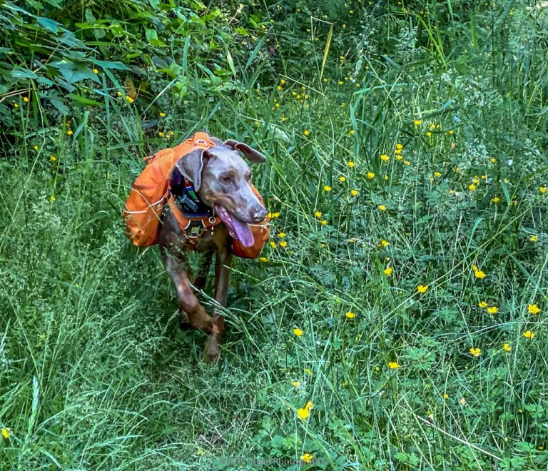 annie in a trail of wildflowers