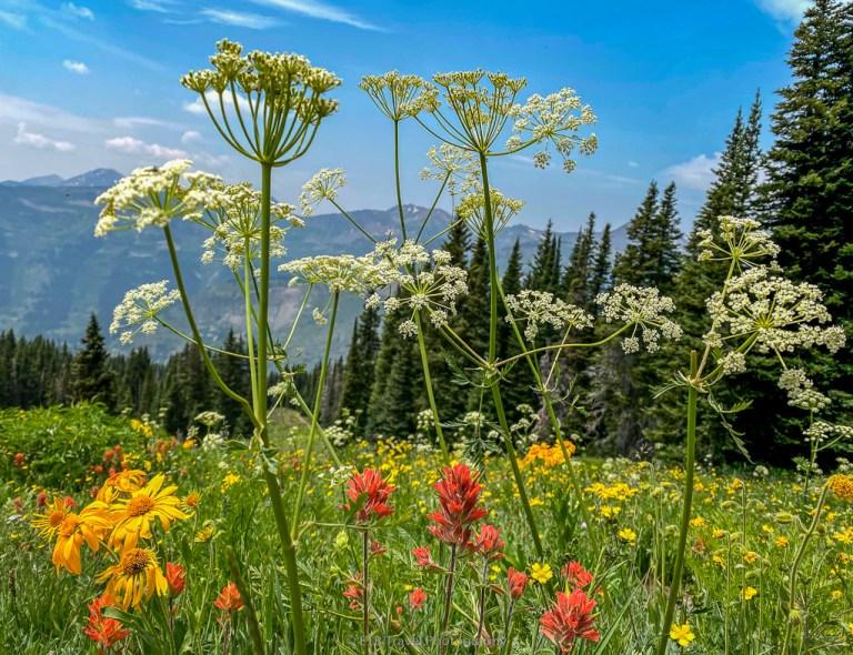 wildflowers on gothic mountain