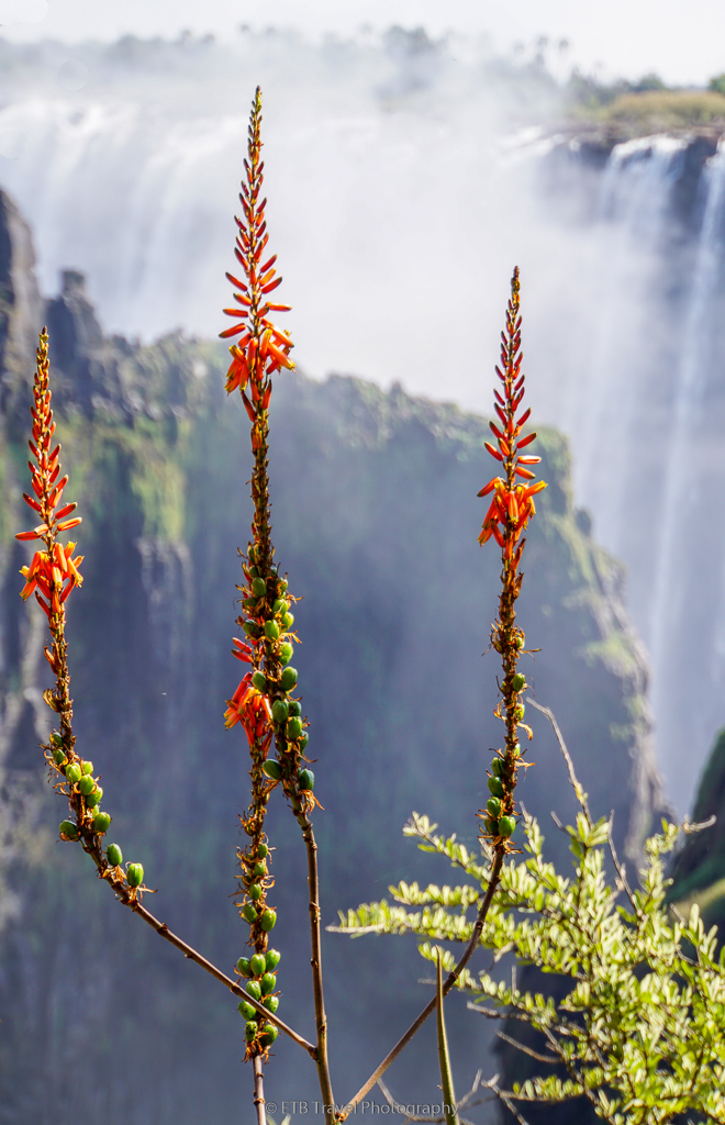 flowers in front of victoria falls