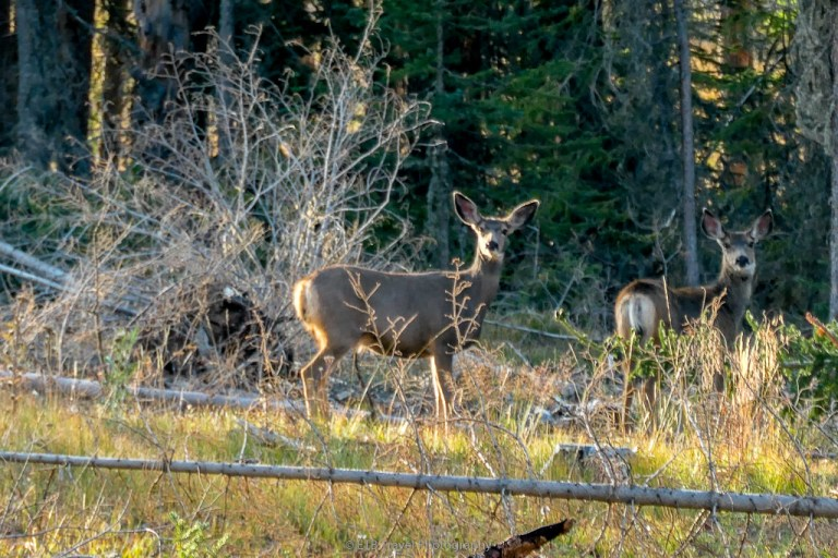 deer in state forest state park
