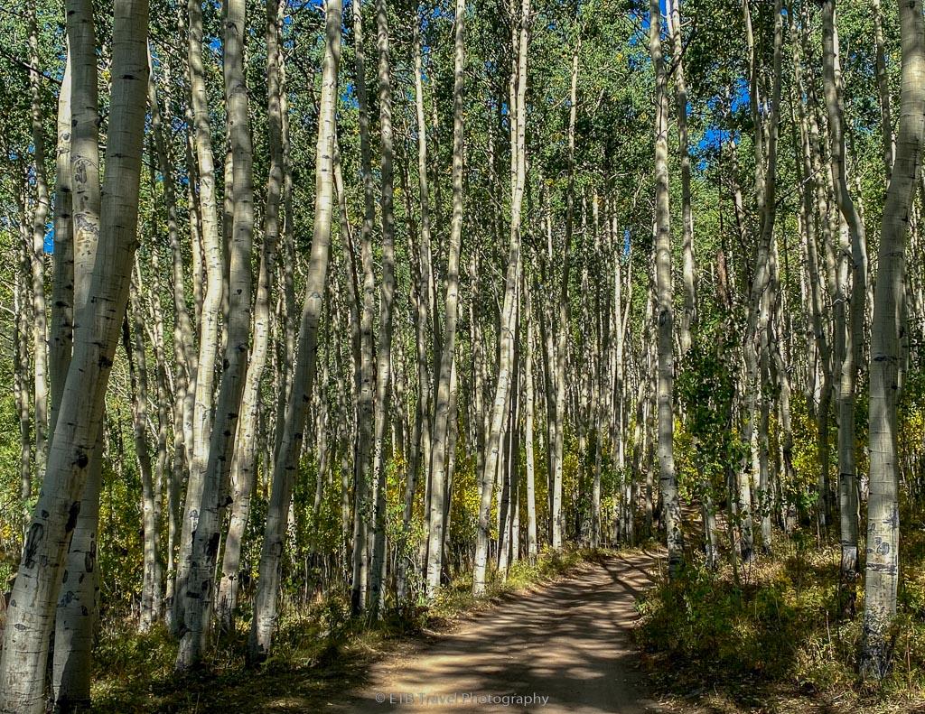 bartlett gulch, beautiful fall hike near Buena Vista