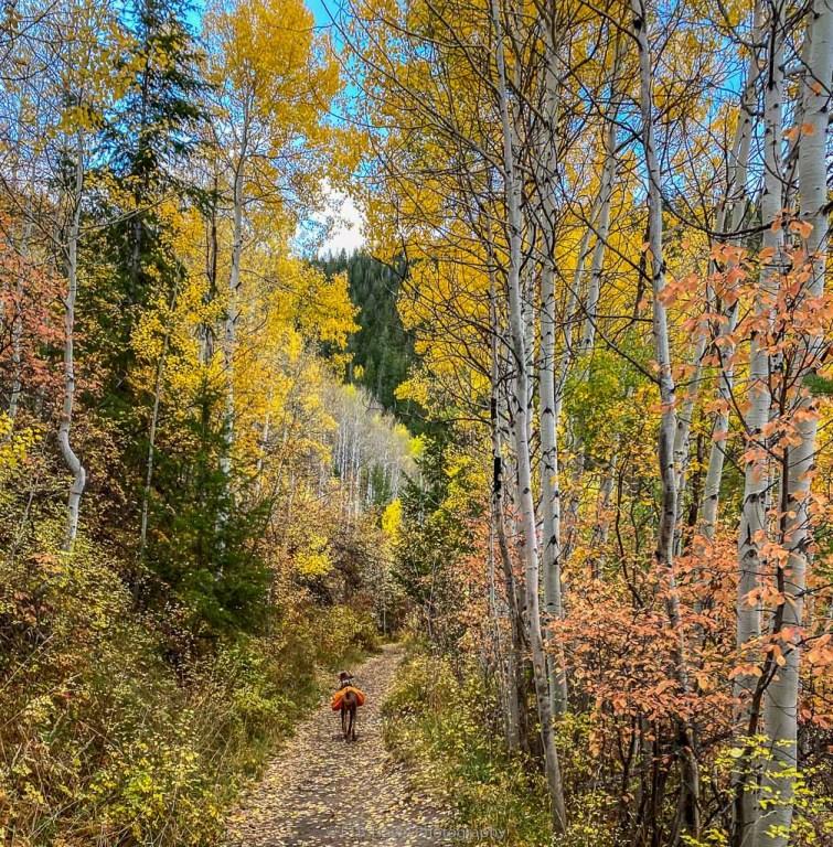 hikes near vail