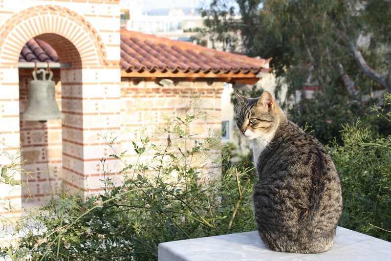 Traveling Greece: Cat-in-Athens