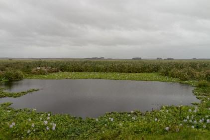 Une des mares de la réserve, où se nichent les capivaras