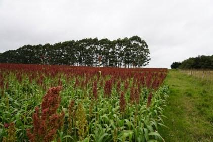 D'un côté le champs du voisin, de l'autre le même champs laissé au naturel