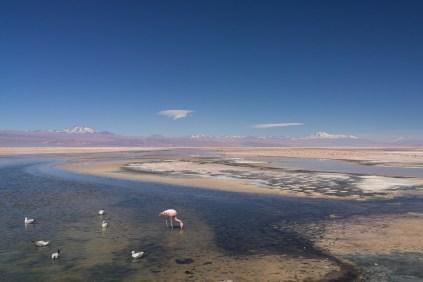 Lagune du désert d'Atacama