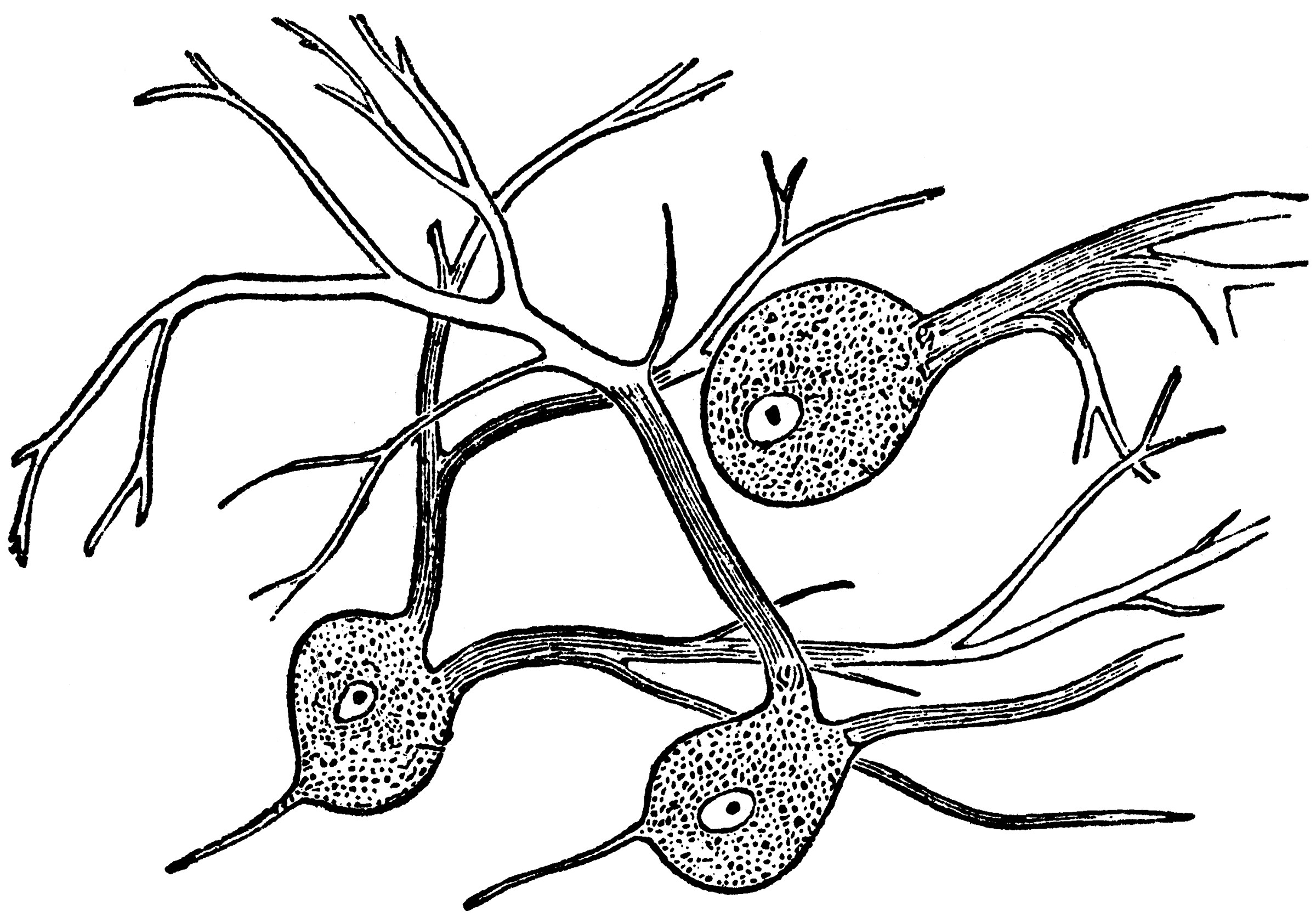 Nerve Cell Coloring Pages