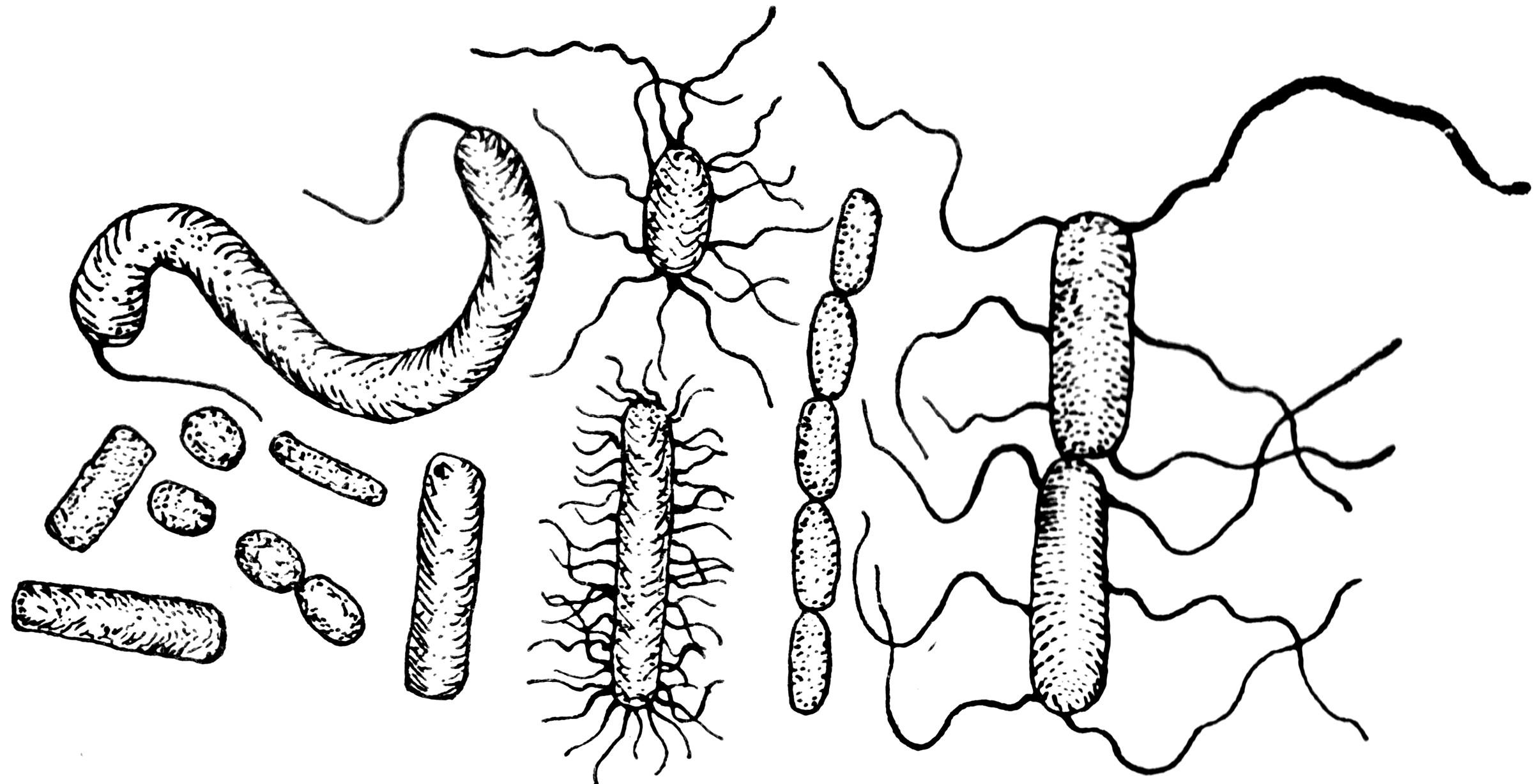 Diagram Of Germs Bacteria Clipart Etc