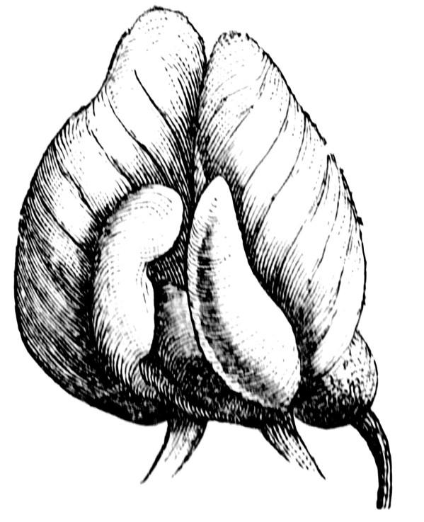 Stylized Flower ClipArt ETC