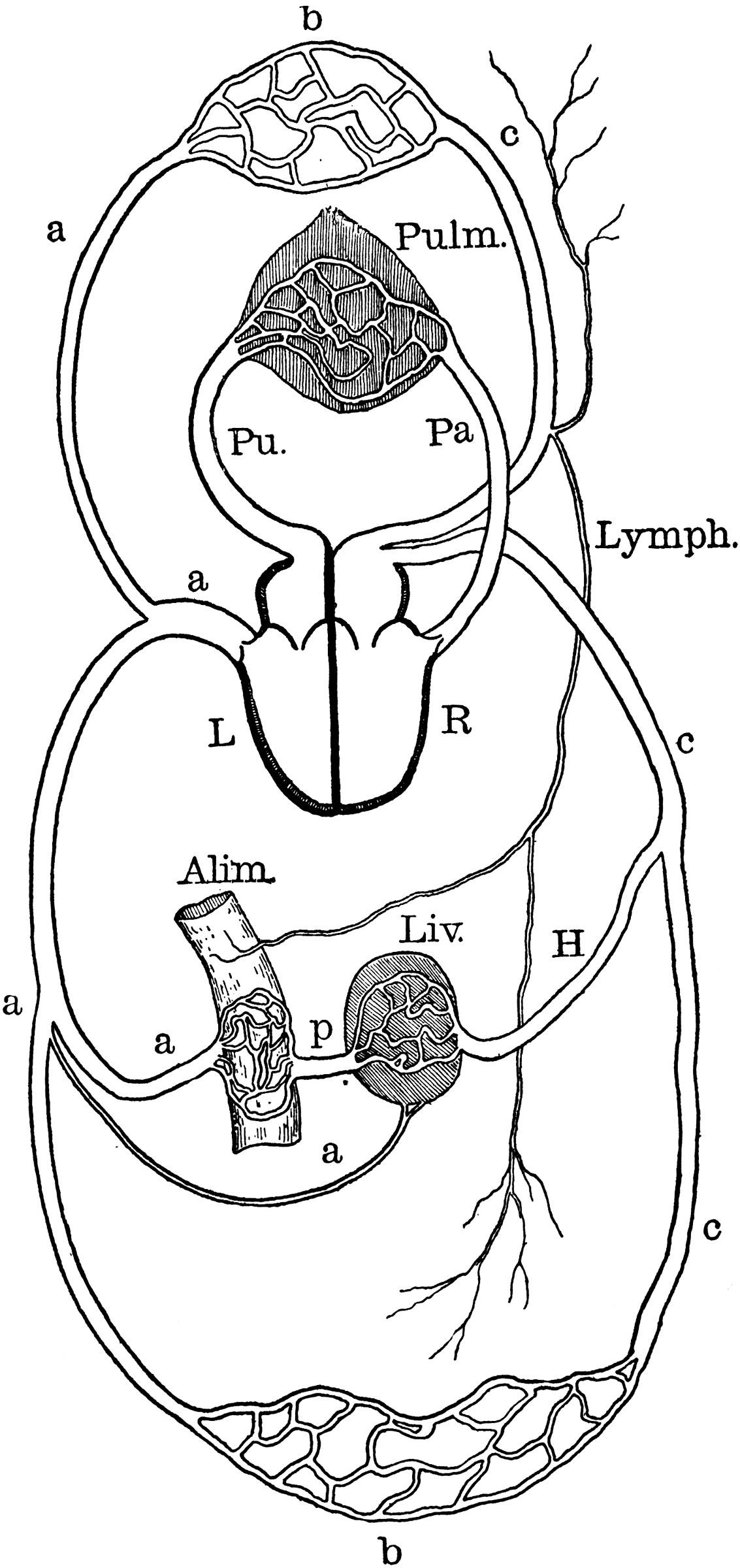 Urinary System Diagram Worksheet