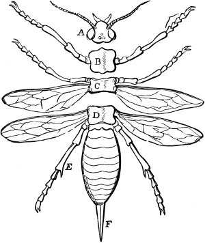 Parts of an Insect | ClipArt ETC