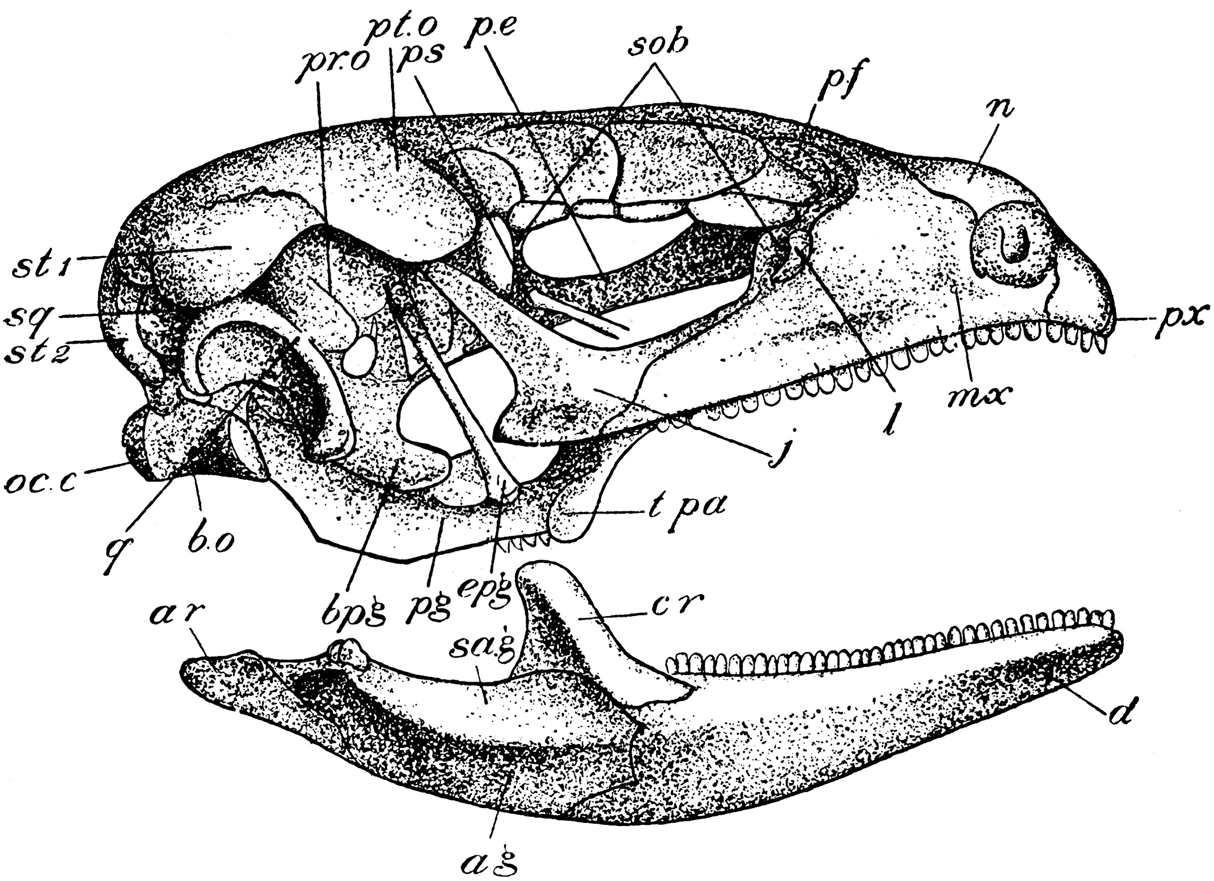 labelled diagram of agama lizard wiring light with 2 switches skull clipart etc