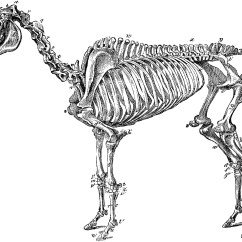 Horse Skeleton Diagram Labeled 3 5 Mm Wireless Transmitter And Receiver Of A Clipart Etc