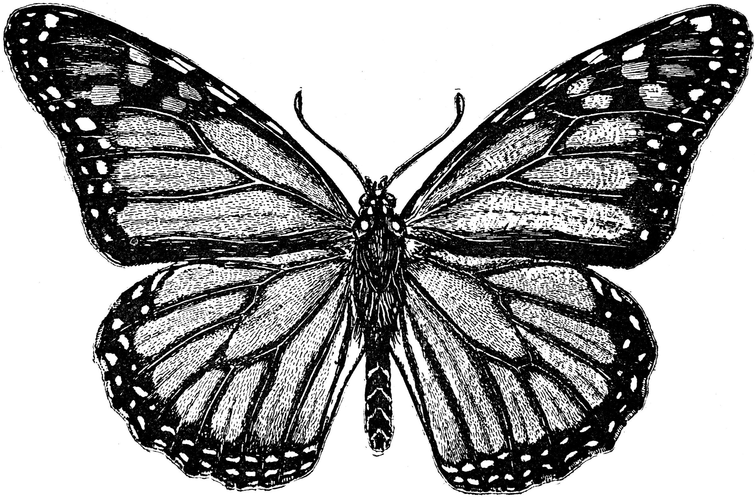 Metamorphosis of a Monarch Butterfly  ClipArt ETC