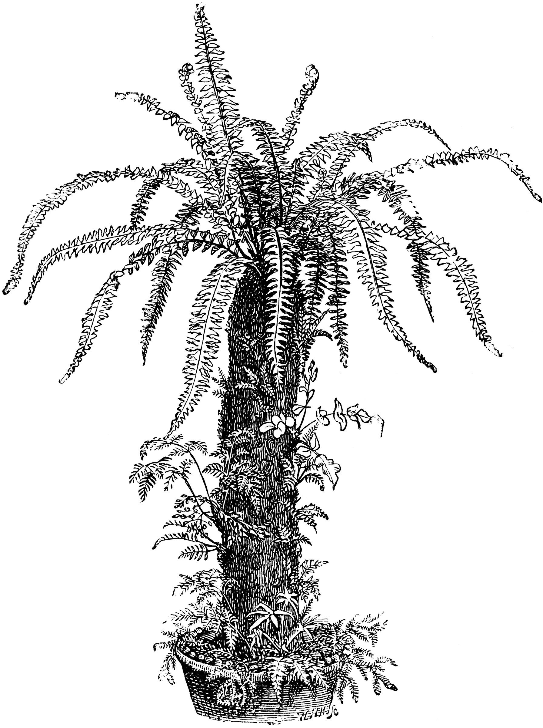 Black And White Leaf Wallpaper Dead Tree Fern Decorated With Ferns Clipart Etc
