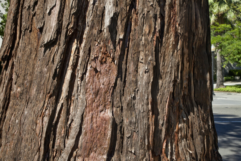 Redwood Bark ClipPix ETC Educational Photos For Students And Teachers