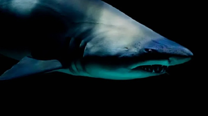 サメに襲われたか…(画像はイメージです)