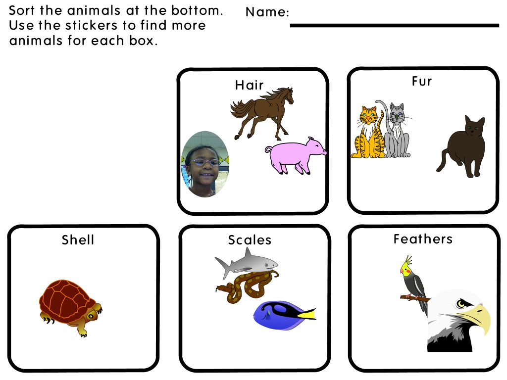 First Grade Animals
