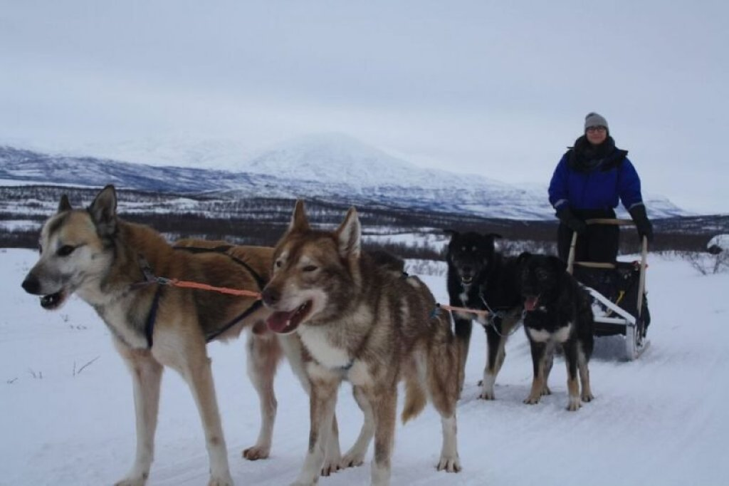 When not seeing the Northern lights, dogsledding is a fun way to pass the time