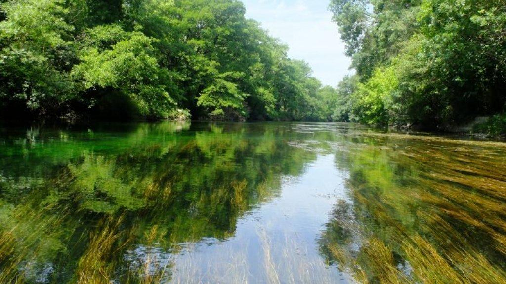 Sorgue River, Provence