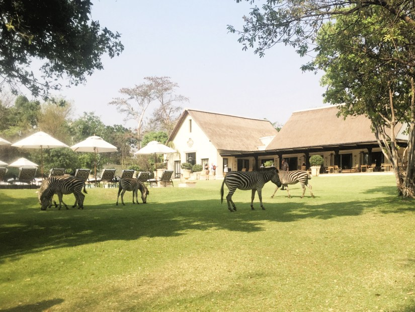 Drink tea with zebras - one of the must do things in Livingstone Zambia