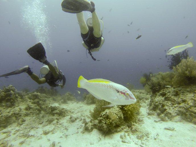 cheap places to learn to scuba dive