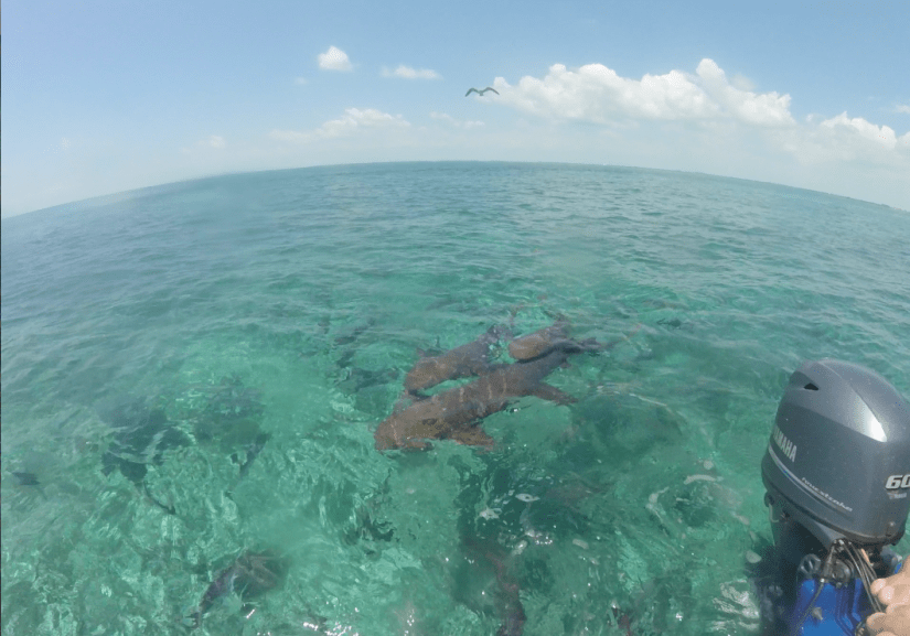 Sharks in the water at Shark Ray Alley