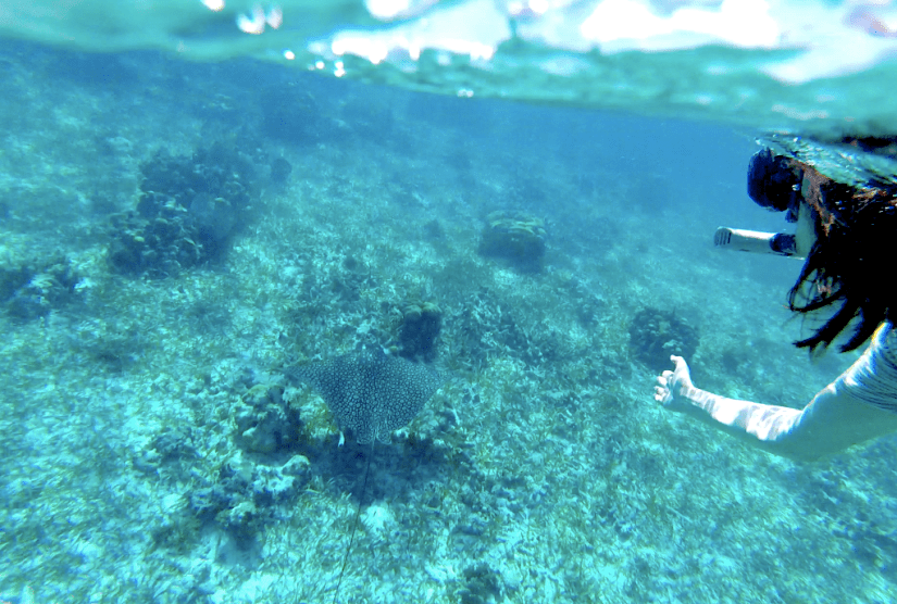 I found an eagle ray while snorkeling