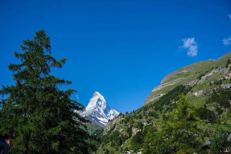 [top of Matterhorn hidden behind trees]