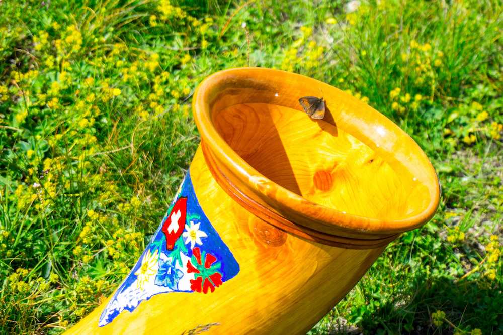 A moth hanging out on the alphorn!